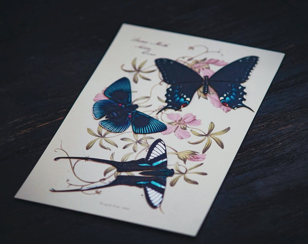 'Midnight' Butterfly Set