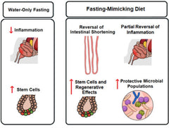 Inflammatory Bowel Diseases - Fasting Mimicking Diet
