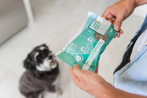 Dog Food Sample - Insect Formula