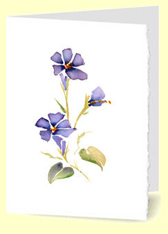 CG-002 Morning Glories
