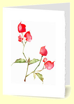 CG-003 Red Bougainvillea