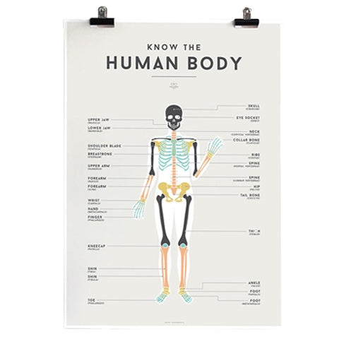 Educational Poster Human Body
