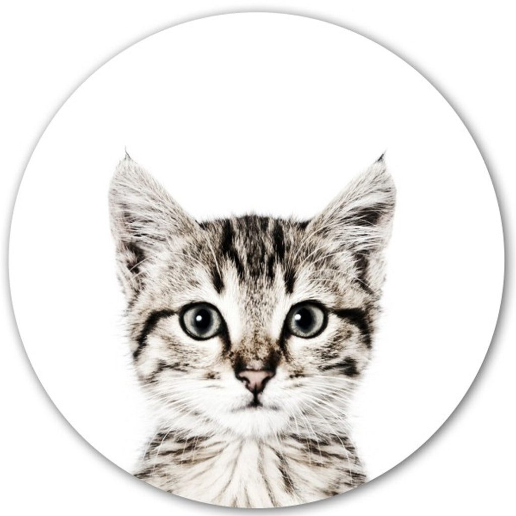 Magnetic Wall Decal Cat