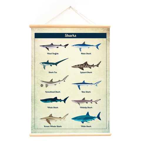 Poster With Hanger Sharks