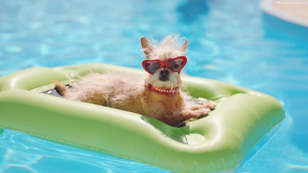 Pools and Your Pets