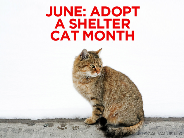 June is Adopt-A-Shelter Cat Month!