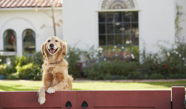 Pet Proofing Your Home Is The Best Bet