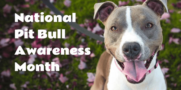 October is Pit Bull Awareness Month!