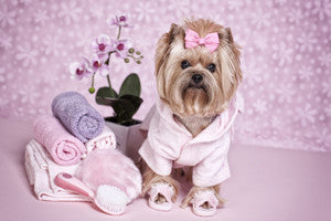 Pampered Pooch