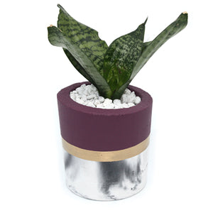 Marble Cylindrical Planter, Painted Top