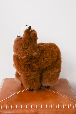 Latierra Plush Alpaca Stuffy in Brown