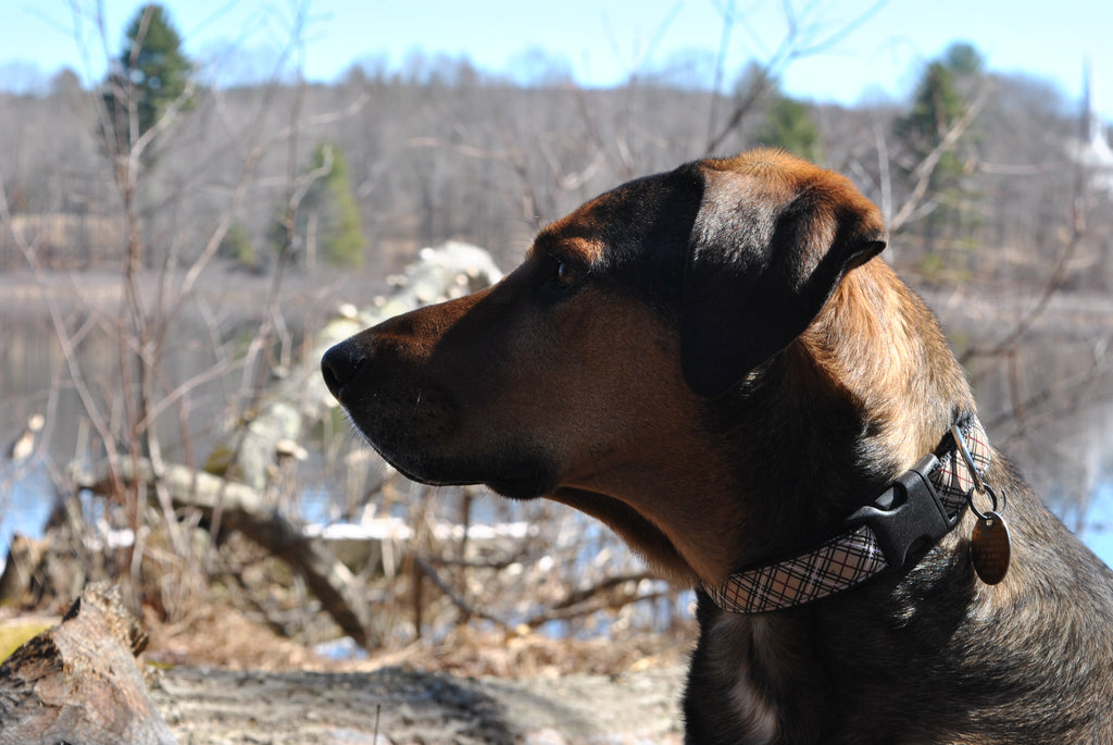 Hearth Hounds welcomes their very own dog blogger!