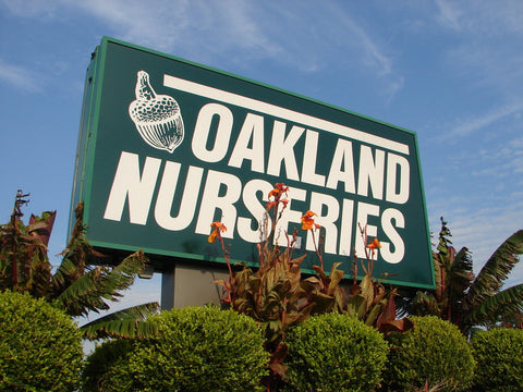 Oakland Nursery carries Hearth Hounds dog Christmas stockings