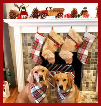 This Golden Retriever shaped Christmas dog stocking is perfect for stuffing toys and treats into to spoil your fur baby for Christmas, or whatever holiday you celebrate!