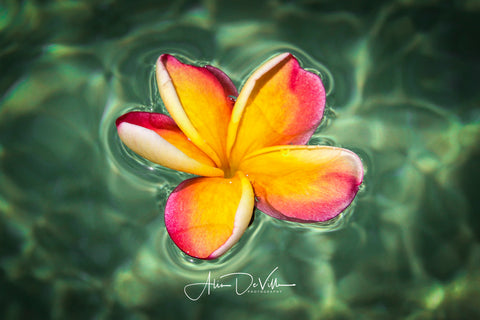 Floating in the Aqua Waters ~ Fine Art Prints