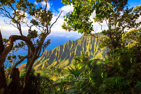 Kalalau Tree View ~ Fine Art Prints
