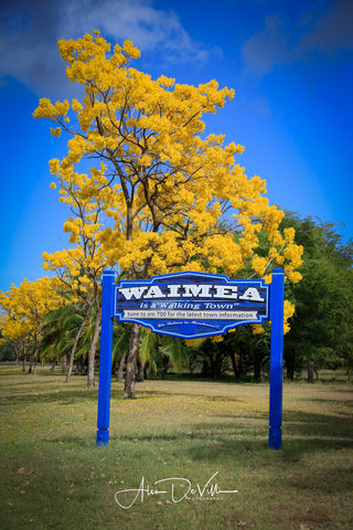 Waimea Gold ~ Fine Art Prints