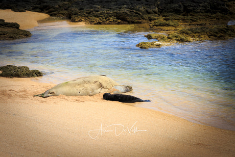 Momma and Baby Monk Seal   ~ Fine Art Prints