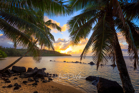 Palm Tree Paradise  ~ Fine Art Prints