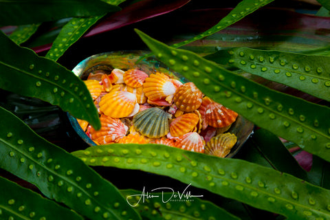 Laua'e Ferns & Sunrise Shells  ~ Fine Art Prints