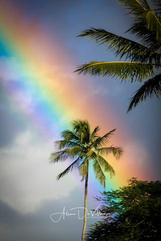 Rainbow Palm Tree ~ Fine Art Prints