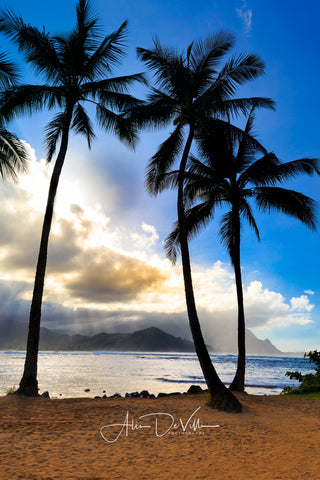 Hanalei Bay Palms  ~ Fine Art Prints
