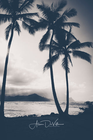 Hanalei Bay Palms B&W  ~ Fine Art Prints