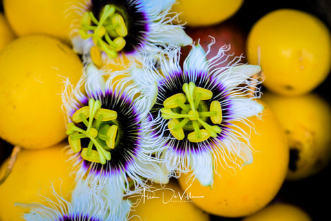 Passion Fruit Gold ~ Fine Art Prints