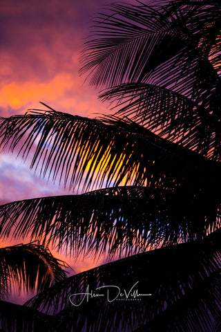 Palm Tree Silhouette ~ Fine Art Prints