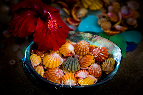 Red Hibiscus & Sunrise Shell Vibrance ~ Fine Art Prints