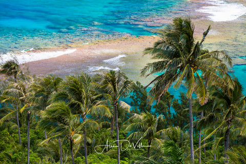Aqua Palms ~ Fine Art Prints