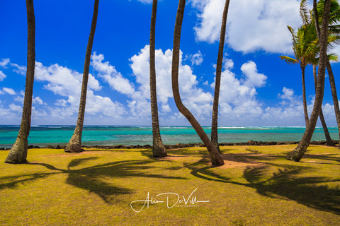 Palms 'n Paradise  ~ Fine Art Prints