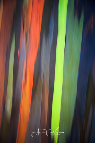 Rainbow Eucalyptus Abstract III  ~ Fine Art Prints
