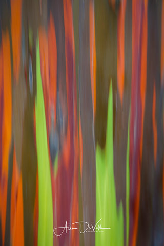 Rainbow Eucalyptus Abstract  ~ Fine Art Prints