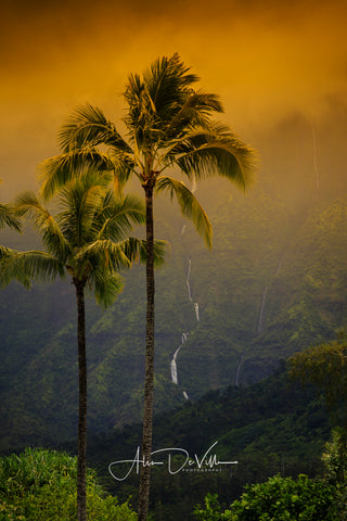 Palm Trees & Waterfalls ~ Fine Art Prints