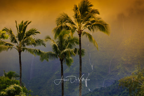 Palm Trees & Waterfalls of Hanalei ~ Fine Art Prints