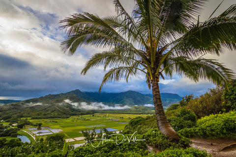 Hanalei Valley Mist ~ Fine Art Prints