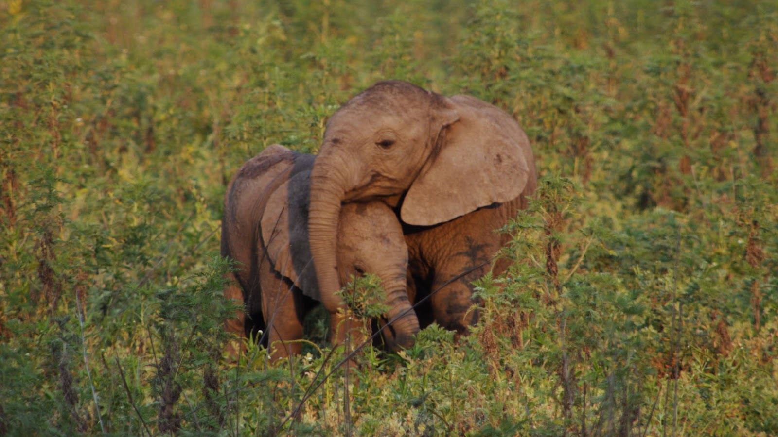 Two elephants in Mozambique