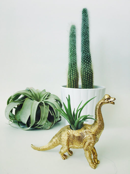 Small Gold Brachiosaurus Dinosaur Planter Air Plant