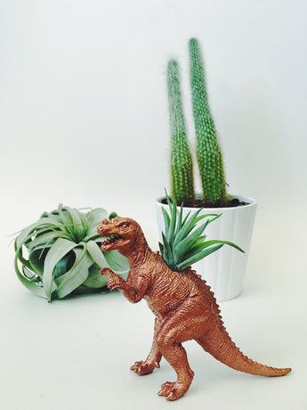 Small Copper Ceratosaurus Dinosaur Planter with Air Plant