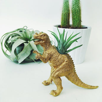 Small Gold Ceratosaurus Dinosaur Planter with Air Plant
