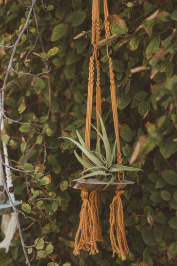Hanging Orange Macrame Wood Slice Air Plant Shelf