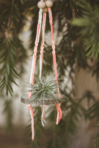 Hanging White + Pink Macrame Wood Slice Air Plant Shelf