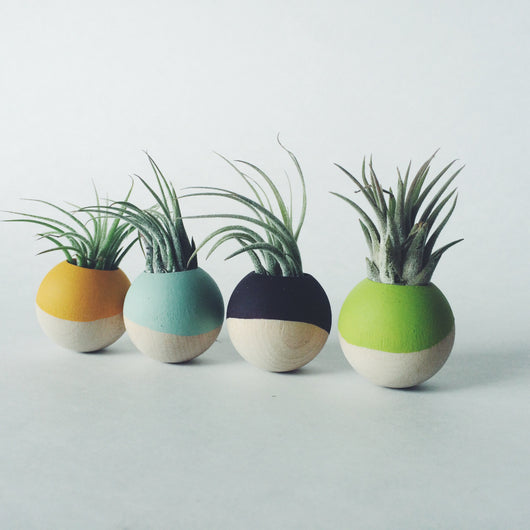 Wood Sphere Paint-Dipped Magnets with Air Plant