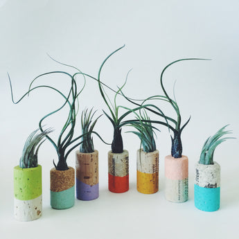 Cork Magnets with Air Plant