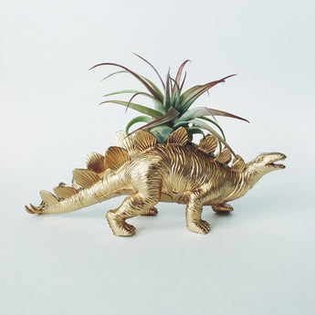 Large Gold Stegosaurus Dino Planter with Air Plant