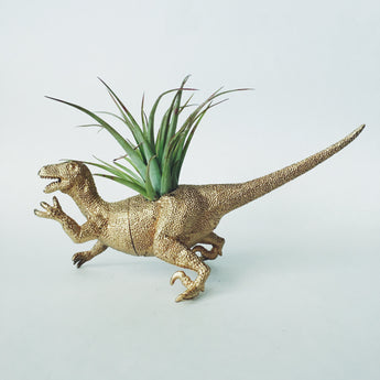 Large Gold Velociraptor Dinosaur Planter with Air Plant