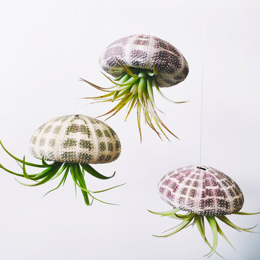 Large Air Plant Jellyfish Hanging Planter