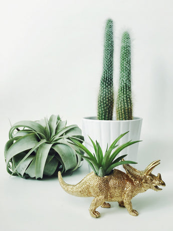 Small Gold Triceratops Dinosaur Planter + Air Plant