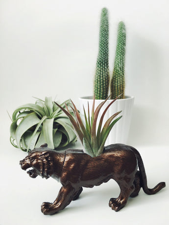 Bronze Tiger Animal Planter with Air Plant